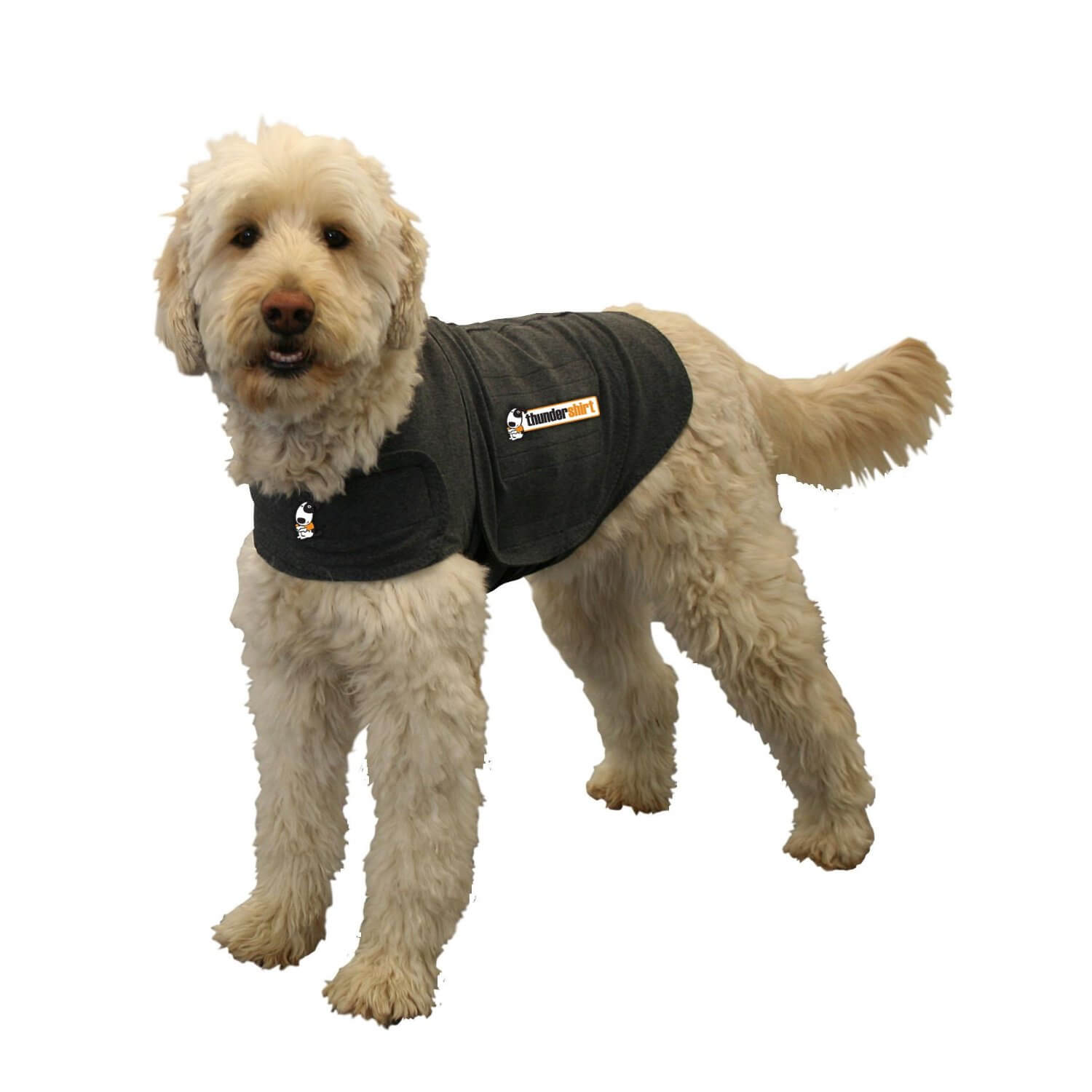 Top 5 Dog Anxiety Vests To Calm Stressed Dogs