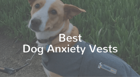 best dog anxiety vests