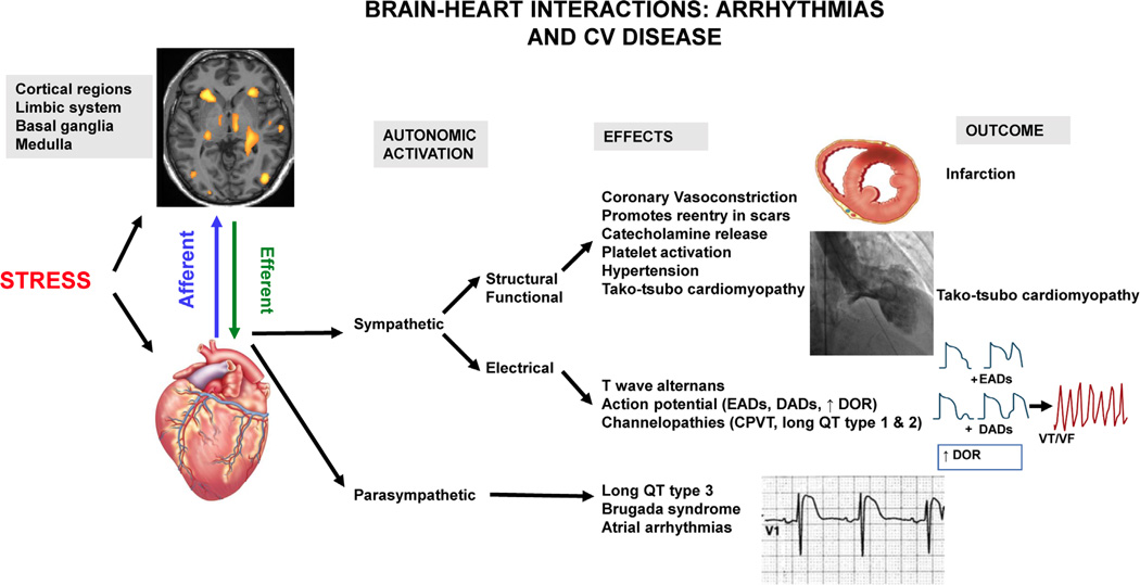 how the brain and heart interact