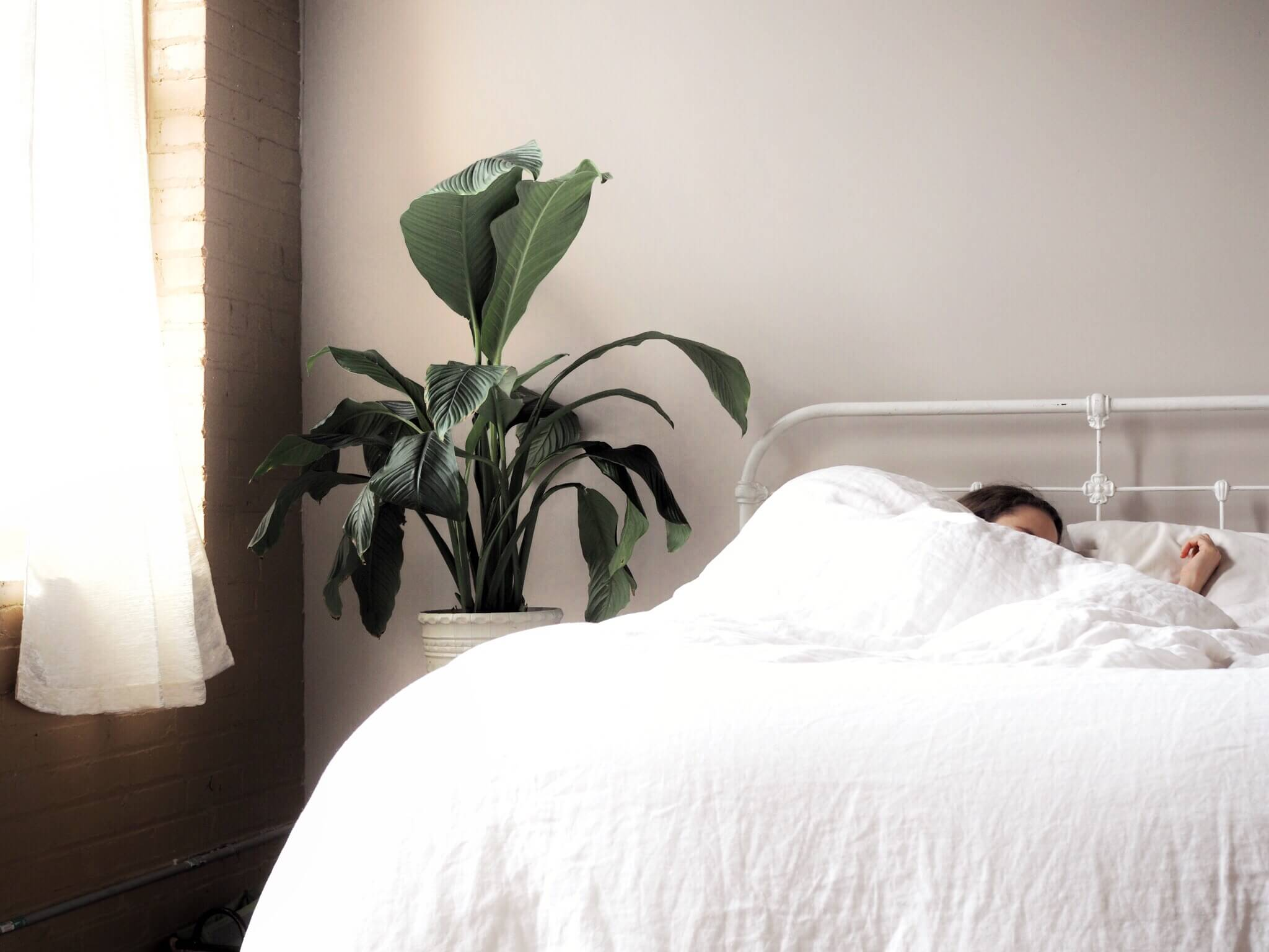 Should You Keep Plants in Your Bedroom
